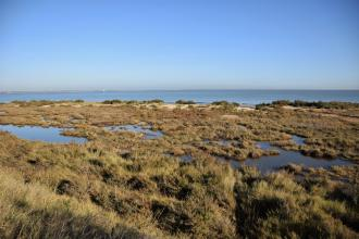 Bradwell Shell Bank nature reserve