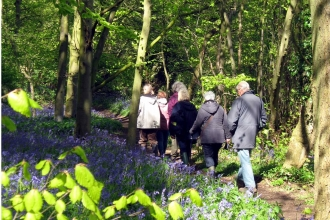Bluebell walk at Chalkney Wood
