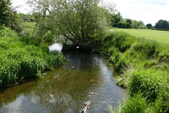 Roding Valley River
