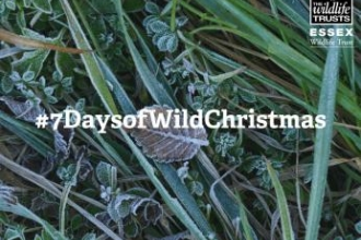 7 days of wild Christmas