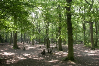 Belfairs Wood
