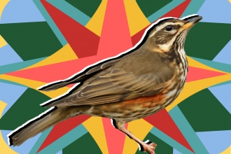 Redwing Species in the spotlight