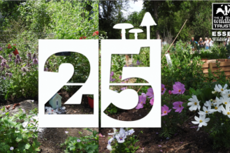 Day 25 | Community Sensory Garden at Langdon