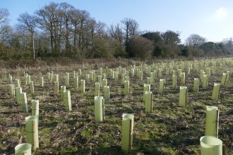 Abberton tree planting