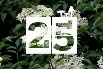 Day 25 | Elderflower Cordial