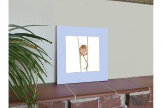 Display of a pastel Doormouse drawing