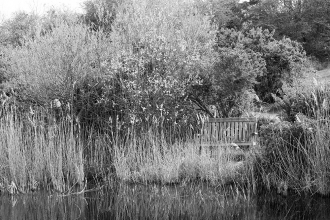 Black and White shot of bench looking over Kitts Pond
