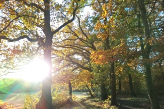 Belfairs Autumn
