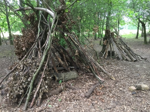Image result for forest fun