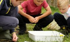 Events with Essex Wildlife trust