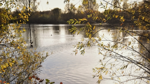 Chigborough Lakes Autumn