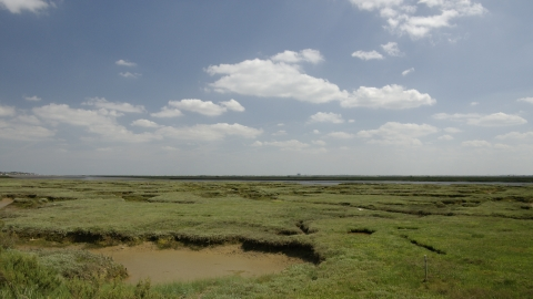 Saltmarsh and estuary at Abbotts Hall Farm