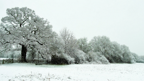Roding Valley in the snow