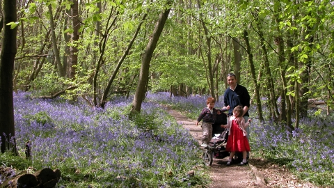 Tile Wood family with Bluebells