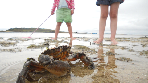Children and crab on the beach