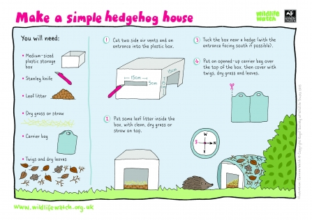 Build a hedgehog home