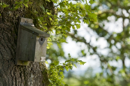 Nest Box - Photo: Ross Hoddinott 2020 Vision