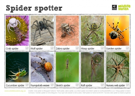 Spider Spotting Sheet