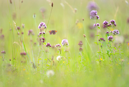 Summer butterfly meadow - Jon Hawkins Surrey Hills Photography