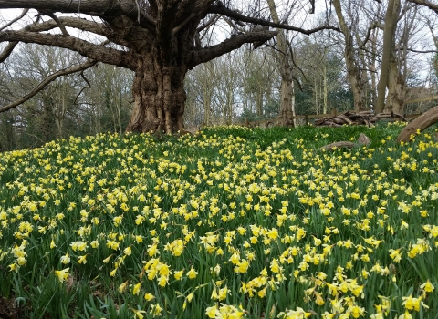 Spring flowers at Warley Place