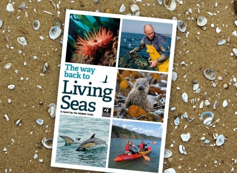 Living Seas Report
