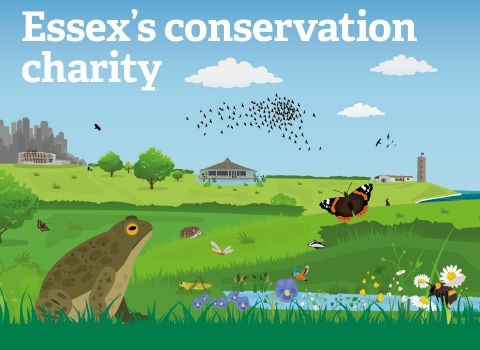 Essex's conservation charity